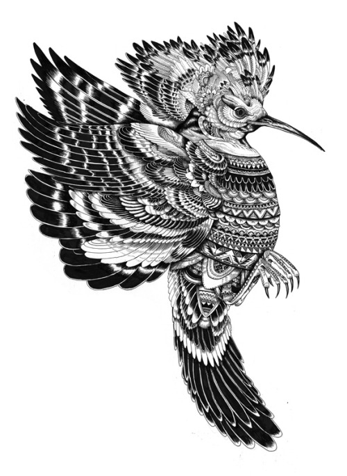 iainmacarthur:  exotic bird pen and ink 2011 by Iain Macarthur www.iainmacarthur.carbonmade.com  This is just fucking cool.