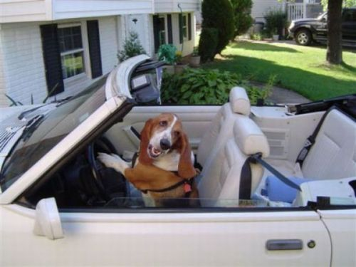 no time to explain, get in the car……………
