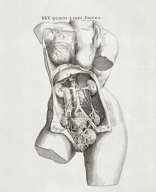 The female pelvic anatomy from De Corporis Humani Fabrica by Andreas Vesalius, 1543
