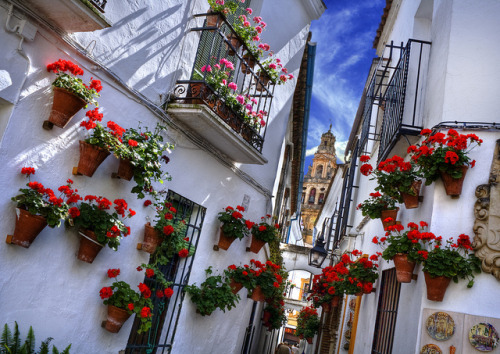 i-cant-take-my-eyes-of:  Flowers street. Córdoba. Spain by Zú Sánchez. on Flickr.