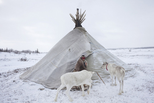 valscrapbook:  telesc0pes: Nenets by Boogie for asìni on Flickr.