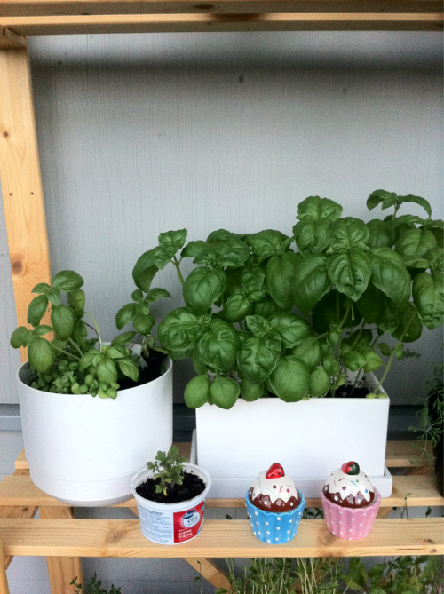 A garden update 2/3: So. Much. Basil. <3