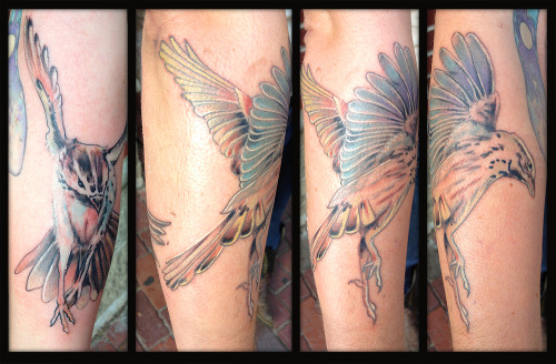 Song sparrows by Natan Alexander of Witch City Ink/Lightwave Tattoo.