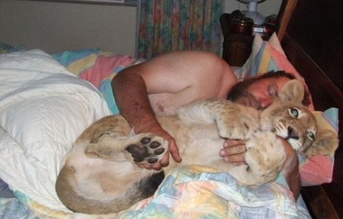 collegehumor:  11 Pictures of Deadly Animals Snuggling with People  Sometimes what you need most in the world is a good friend. And sometimes that friend is a giant, deadly animal with razor-sharp teeth that could kill you without a moment's hesitation. Here's 11 pictures of frail, pathetic humans getting along swimmingly with deadly animals.