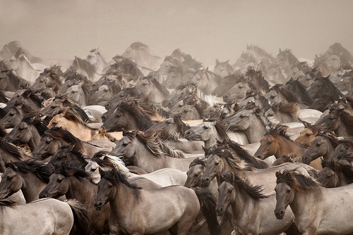 "earth-song:   ""Wild Horses"" by Stefanie Lategahn"