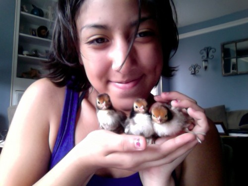 yayyyy chickiesssss in my house!!! :D theyre so cute and teeeny. theres 5 more but i couldnt hold em allll :D <3