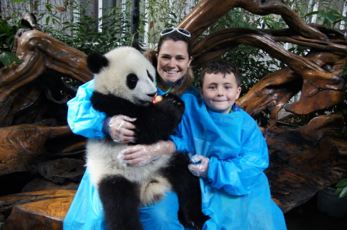 Giant Panda research base in Chengdu China with my son Jesse