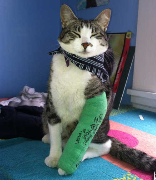 "thefluffingtonpost:  Kitty Healing Well After Skateboarding Accident A cat named Keito is resting comfortably after failing a ""laser flip"" at the local skate park and breaking his left arm. ""Bro, he was so close too,"" says Cody 'Toasty' Brackins, a friend and fellow skateboarder. ""It would have been such a sweet move — you know, if he hadn't fallen on his ass."" Keito's doctors say he should be ready to ""flip some sick ollies"" again in 6-8 weeks.  Via mikecola."