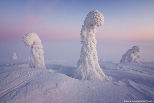 The picture was taken last winter in Finnish Lapland where weather can include sub-freezing temperatures and driving snow. Surreal landscapes sometimes result, where common trees become cloaked in white and so appear, to some, as watchful aliens.