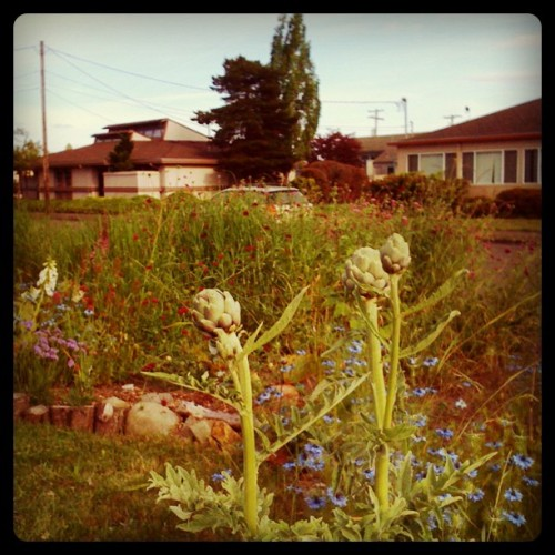 artichokes!! (Taken with Instagram)