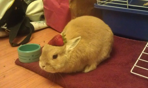 stuffonmyrabbit:  Strawberry