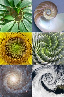 Even DNA follows the golden spiral.