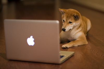 twinleaves:  memphis:  Spokesdog for Apple?! {Explored} by Rock K on Flickr. my spirit animal  His masters …
