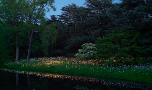 Light installation by Bruce Munro