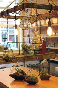 yellowcardigans:  happihausu:  geometric terraniums <3  i really want a terranium