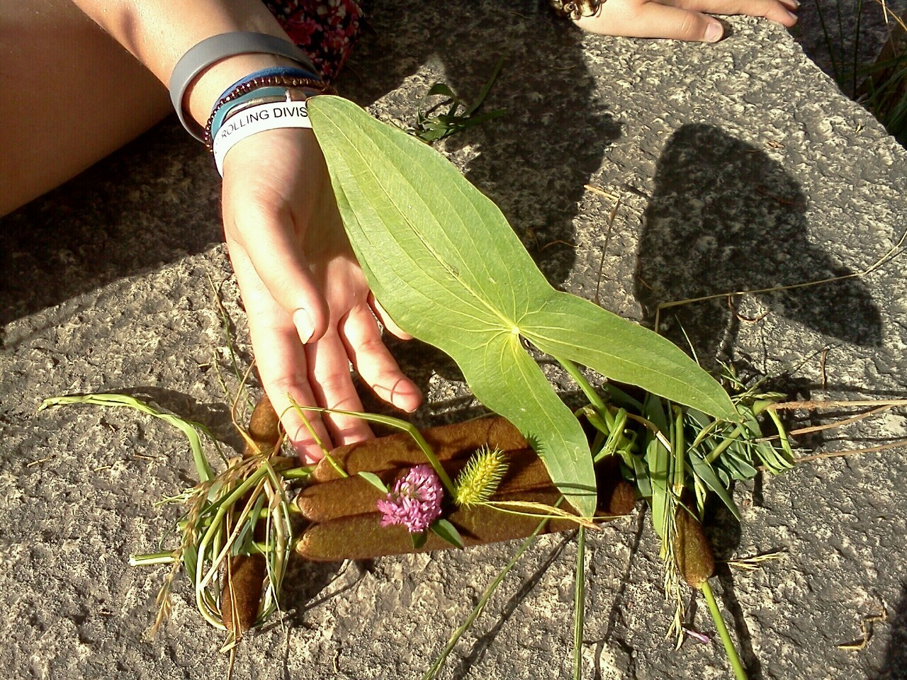 a little raft made out of cattails and pond lilies!