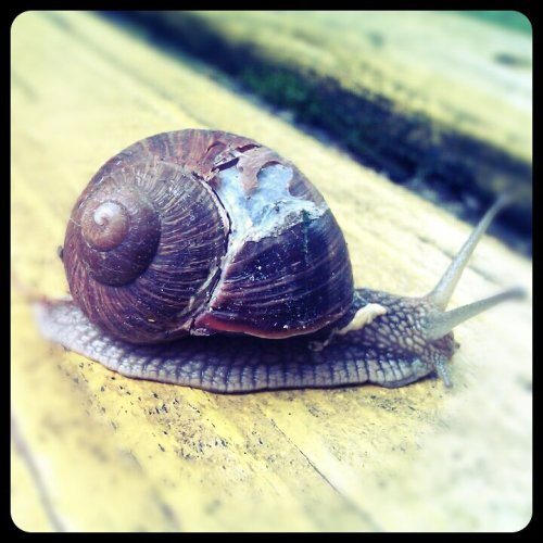Melc melc …#Snail #garden(from @la.nuee.reveuse on Streamzoo)