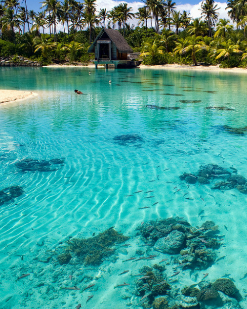 visitheworld:  Turqoise waters of Bora Bora lagoon in French Polynesia (by HighDynamic).