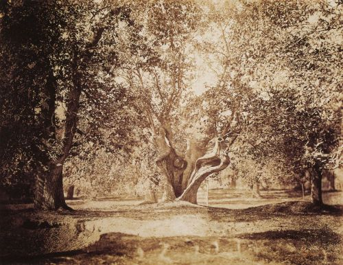 turnofthecentury:  liquidnight: Gustave Le Gray, Old Oak Tree, Fontainbleau, circa 1855-1857 From Gustave Le Gray: 1820-1884  Amazing photograph. I love this so…