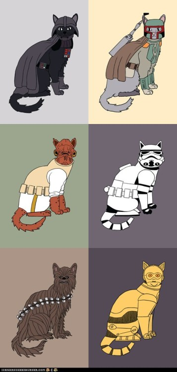 May the meow be with you.