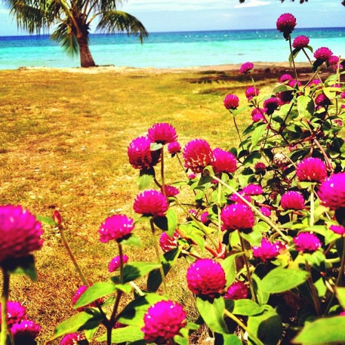 #summer #philippines #flowers #beach #sea #paradise (Taken with Instagram)