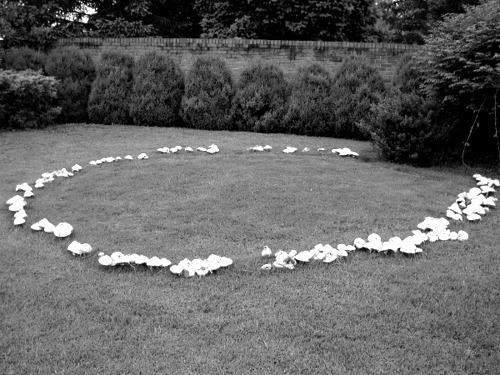sc4rymmary:  A fairy ring is a naturally occurring ring of mushrooms. They are also known as pixie's rings, faerie circles, or elf circles. The English believed that fairy rings were where fairies came to dance and celebrate, the mushrooms of the rings were used as stools for the fairies to recuperate during the evenings festivities. (OP)