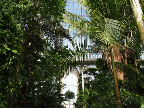 Obligatory palm house