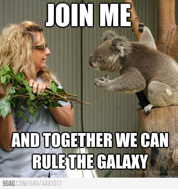 eltripi:  (vía The force is strong in this koala)