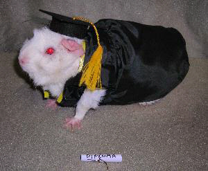 *Congratulations to the Class of 2012!* Although I technically graduated with my Master's degree in March, my school's ceremony is today and I'll be walking. Thank you to my loyal followers for supporting me… I know sometimes there's large gaps between posts… life gets busy when you grow up! But really, thanks for all the kind messages and reblogs… you guys rock! ~Alyssa
