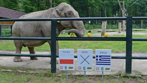 Euro 2012 Animal Race Heats Up  In the frantic race to be the top animal predicting results of the European soccer championship taking place in Poland and Ukraine, it appears one has clearly fallen off the pace…[read more]