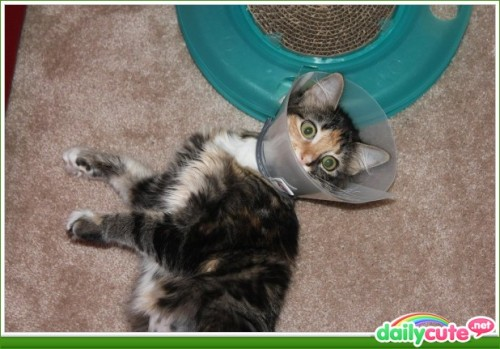 Kitty in a Cone http://www.dailycute.net/Cats/Kitty-in-a-Cone/8762