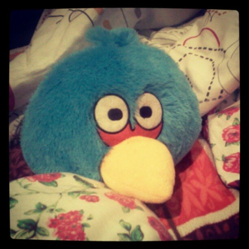 My favorite angry bird, 7abowa xD #randomshot  (Taken with Instagram)