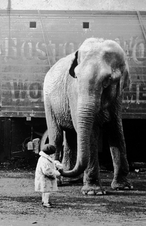 hollyhocksandtulips:  At the circus, 1930s