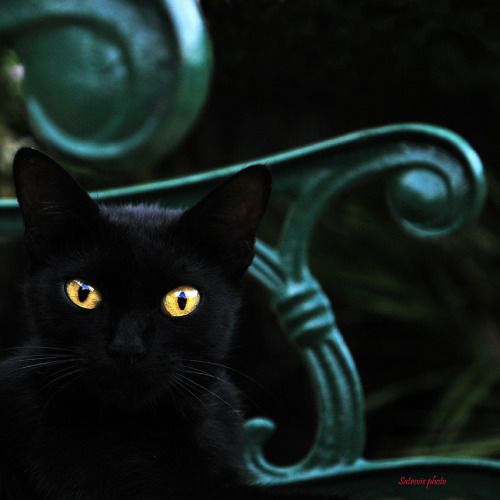 gatoseoutrosbichos:  Cat's Style( Black cat on green) (by Mario Curci (Satreviè))