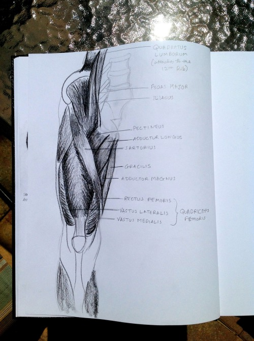nirjadesai:  Here are the thigh muscles. Ahhhh today's exam is going to be brutal.