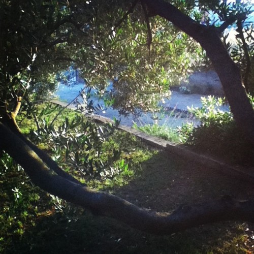 #garden #nature (Taken with Instagram)