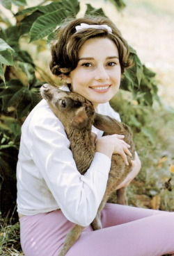 pinmywings:  Audrey Hepburn with her pet deer, Ip, photographed by Bob Willoughby, 1958