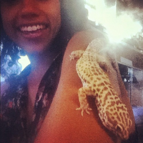 Gilli #Love. In Alex's #atrium. #reptiles #gecko #fun  (Taken with Instagram)