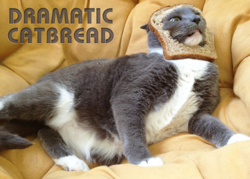 Dramatic Catbread