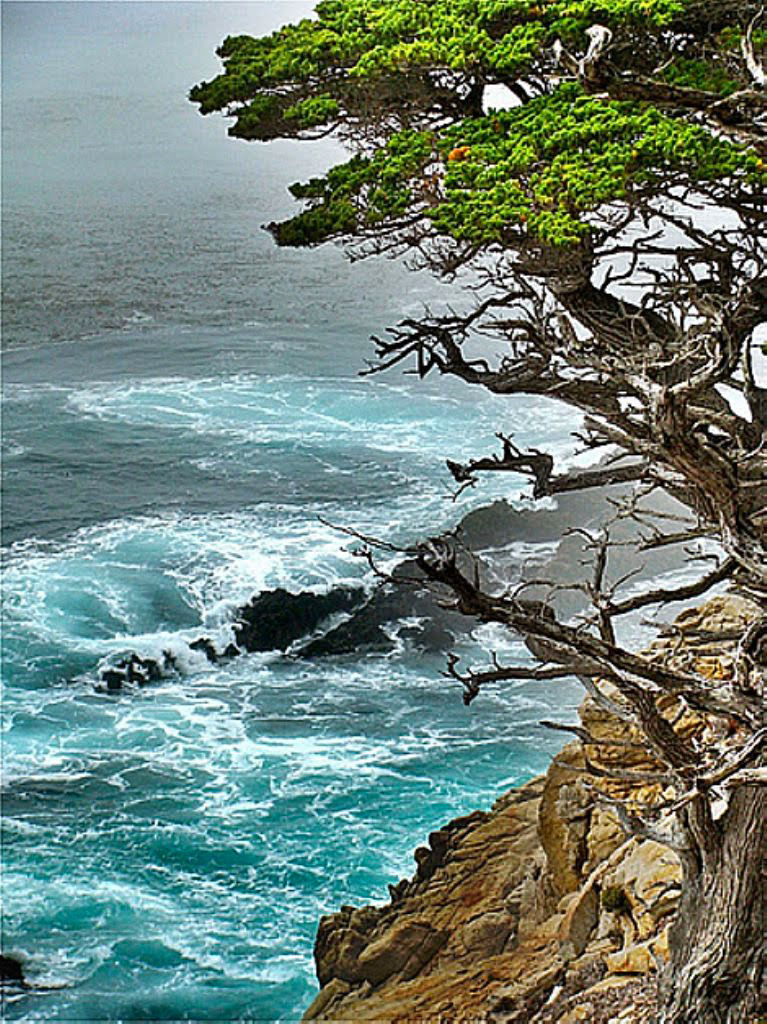 Point Lobos State Reserve, Alan Memorial Trail | image by carol koceja
