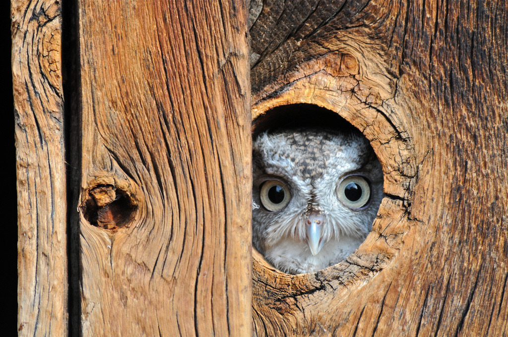 theanimalblog:  Peek a boo (by mtngirl911)