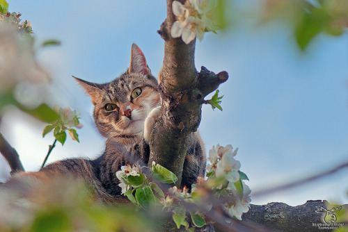 bigcatface:  waiting for some birds by Outburner on Flickr.