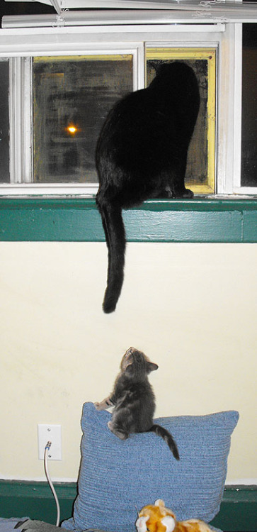 "catsbeaversandducks:  ""I wanna climb too! I wanna climb too! I wanna climb too!"" Photo by ©Melissa DeHaan"