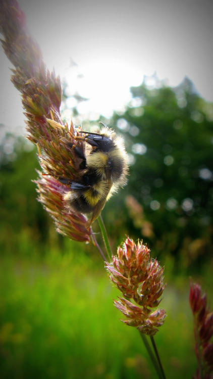 A bee doing its thing, pollinating.