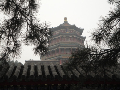 Between the trees…ancient chinese architecture…China Source: (Zacapatista 2009)
