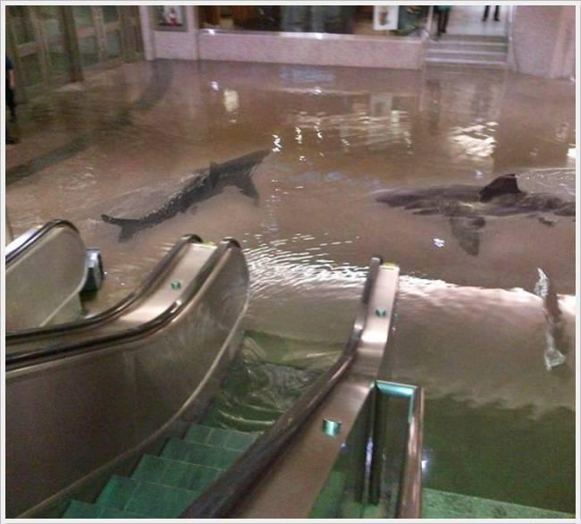 shroomburgers:  thenewjerktimes:  A shark tank burst in Kuwait, creating this beautiful fantasy/nightmare.  casual