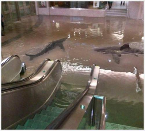 """Welcome to the Aquarium. Please follow the down escalators to get started…""  fuckyeahsharks:  thenewjerktimes:  A shark tank burst in Kuwait, creating this beautiful fantasy/nightmare.  IT HAS BEGUN."