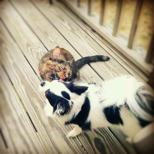 My two responsible children enjoying deck life. (Taken with Instagram)