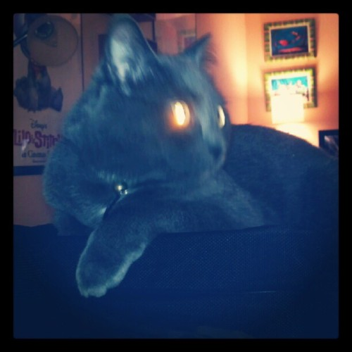Lasers charging… #cattweets (Taken with Instagram)
