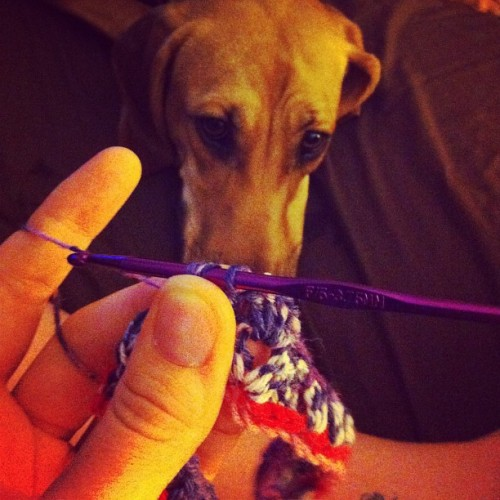 Henrietta watching me crochet.  (Taken with Instagram)